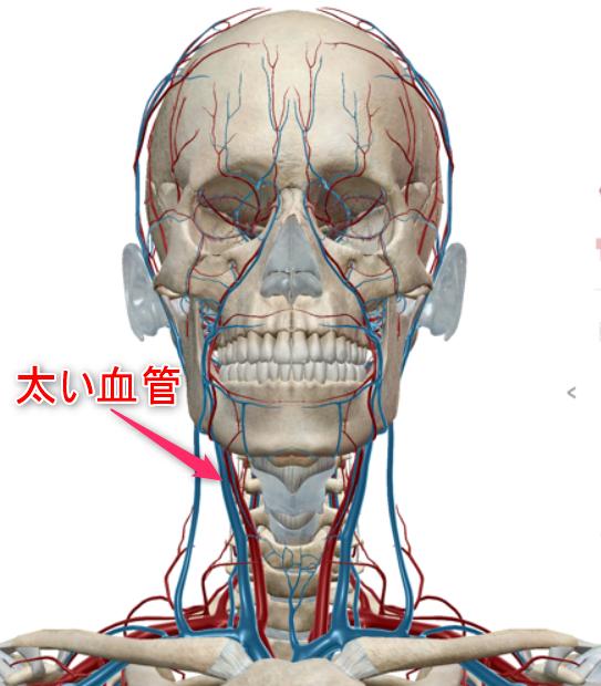 首の太い血管のイメージ