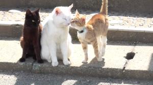 猫島のネコちゃんたち
