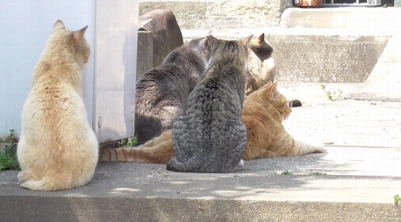 相島のネコちゃんたち