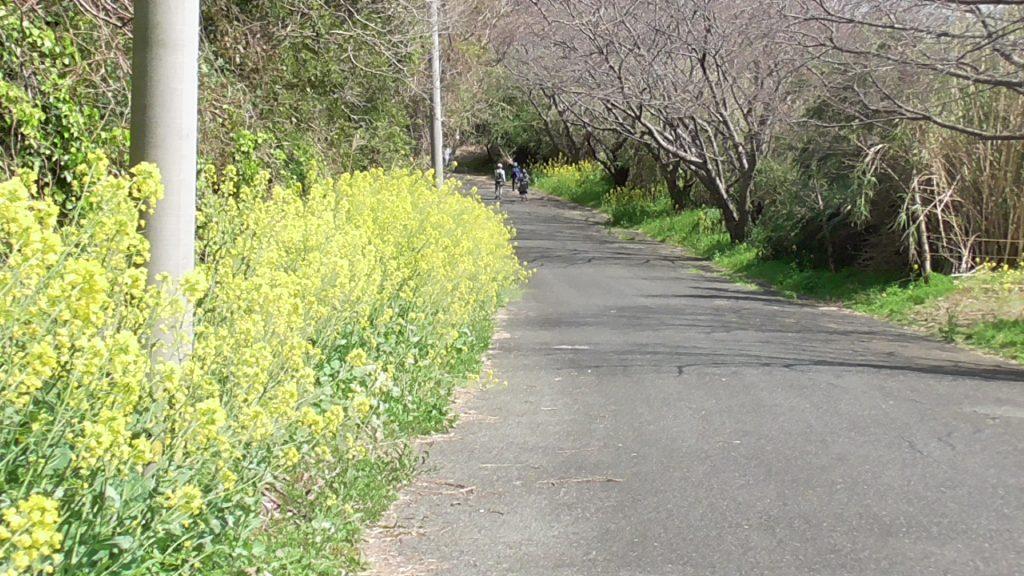 相島の歩道イメージ