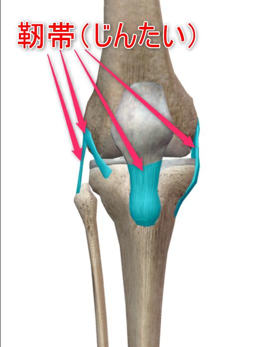 膝の靭帯のイメージ