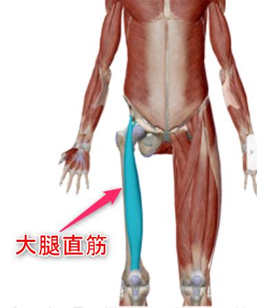 大腿直筋イメージ